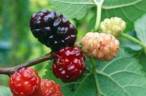 lam-dep-da-voi-ho-hang-nha-berry