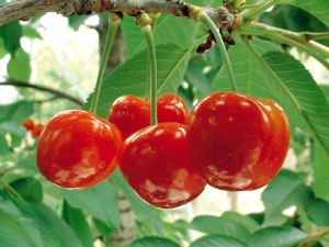 lam-dep-da-voi-ho-hang-nha-berry2